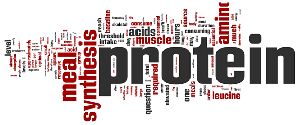 Layne-Norton-Protein-Synthesis-Wordle